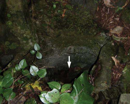 News from the depths: A new cave-dwelling flatworm species from the Brazilian savanna