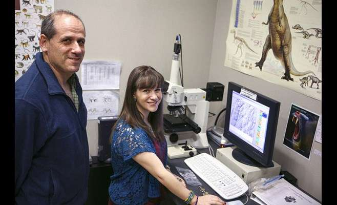 New studies explore impact of environmental change on tooth wear