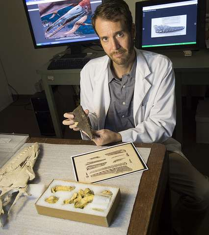New toothed pterosaur identified from North America's Cretaceous