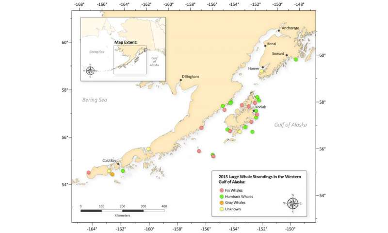 NOAA declares deaths of large whales in Gulf of Alaska an unusual mortality event