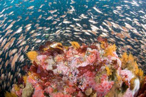 NOAA expands Cordell Bank, Gulf of the Farallones marine sanctuaries off California