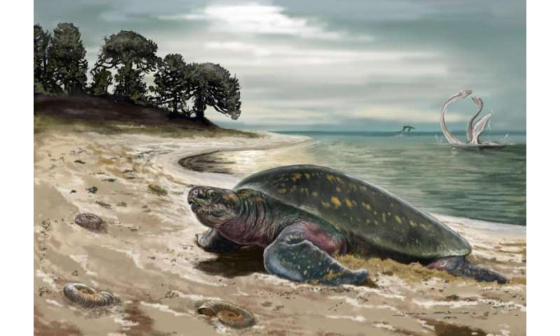Oldest fossil sea turtle discovered