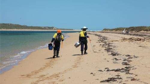Pilbara digs debunk timeline for ancient tool development