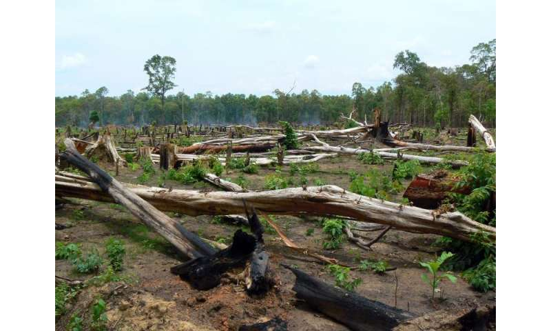 Protected and intact forests lost at an alarming rate around the world