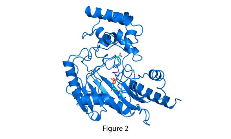 Researchers bring to life proteins' motion