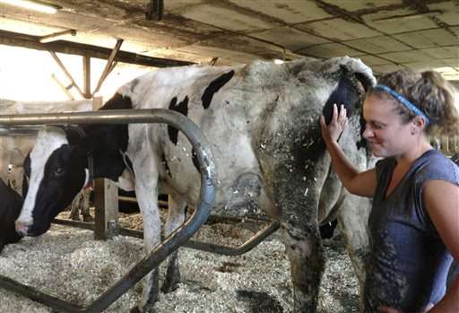 Robots take root on smaller dairy farms, upping production