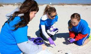 Scientists, students scour Florida Panhandle beaches for oil
