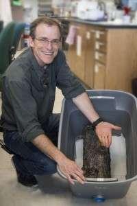 Scientist uses fungus to destroy bark beetles
