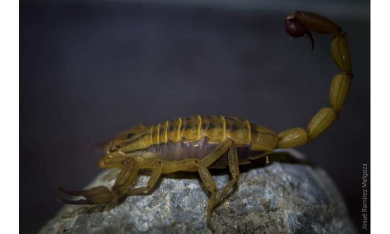 Scorpion venom has toxic effects against cancer cells