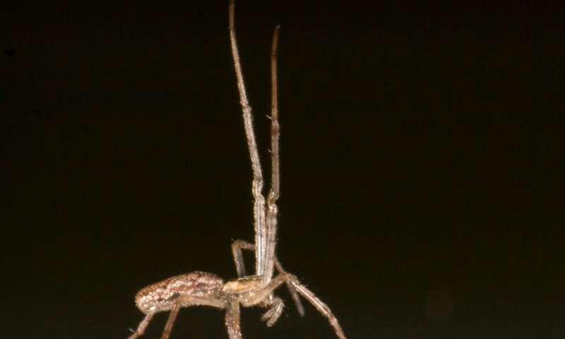 Seafaring spiders depend on their 'sails' and 'anchors'