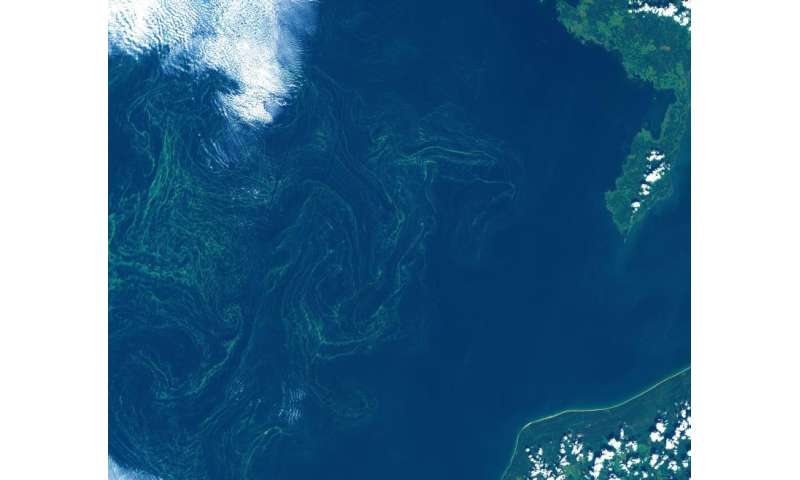 Sentinel-2 catches eye of algal storm