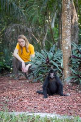 Spider monkeys point to new understanding of hand dominance