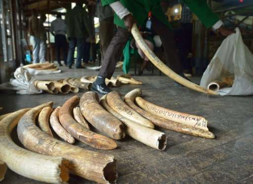 Staff members of the Kenya Wildlife Services do the inventory of illegal elephant ivory stockpiles in Nairobi on July 21, 2015