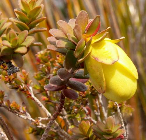 Stirling Range flora nears extinction