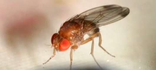 Stop fruit flies by removing rotten fruit