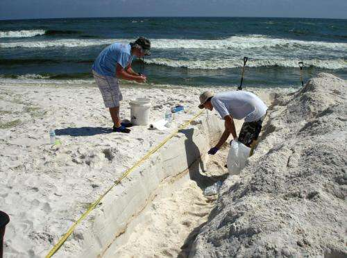 Study details impact of Deepwater Horizon oil on beach microbial communities