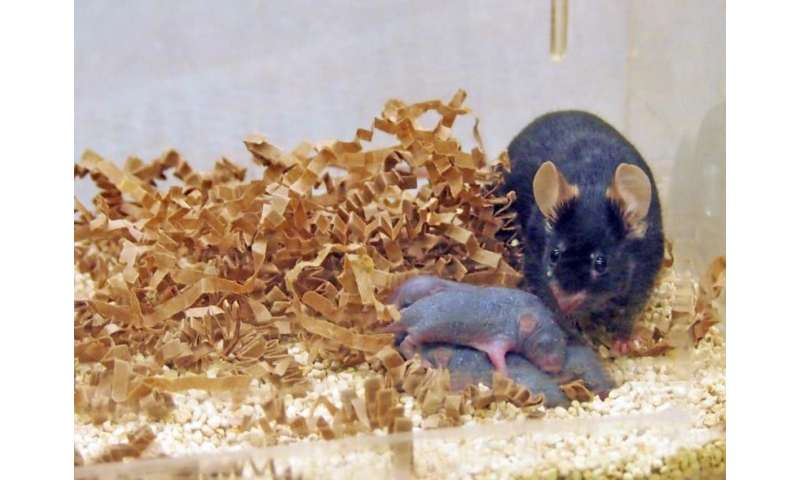 Study finds males may contribute to offspring's mental development before pregnancy