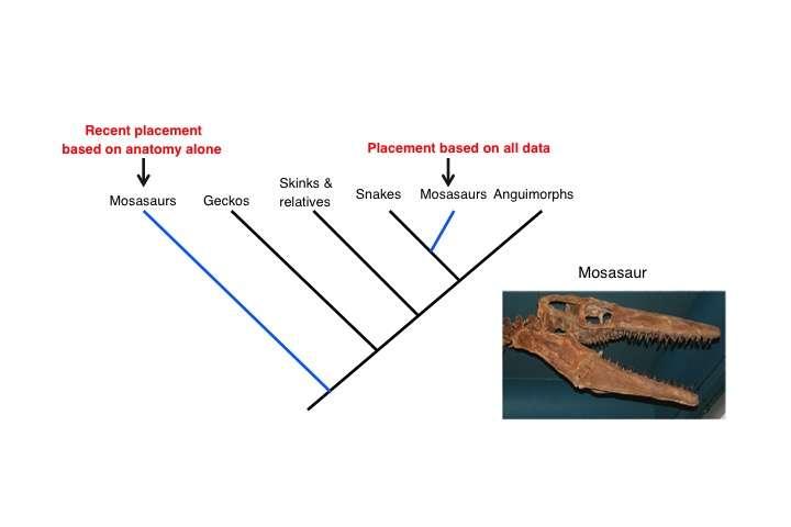 Study Resolves Reptilian Family Tree