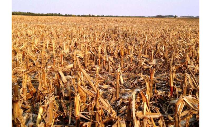 Study shows potential for growth in biofuels from corn stover