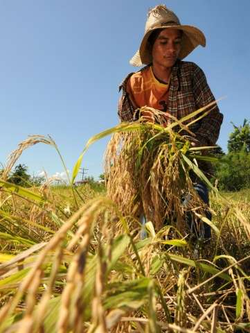 The Philippines estimates that almost 66,000 farmers will be affected by the dry spell, with production losses of 2.168 billion