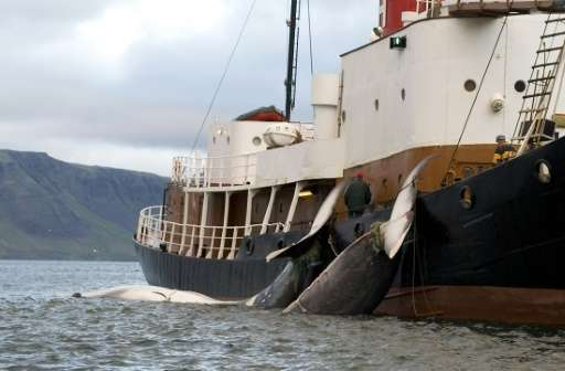 Japan Plans New Whaling Mother Ship