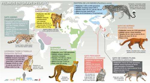 Threatened felids are understudied by researchers, according to report