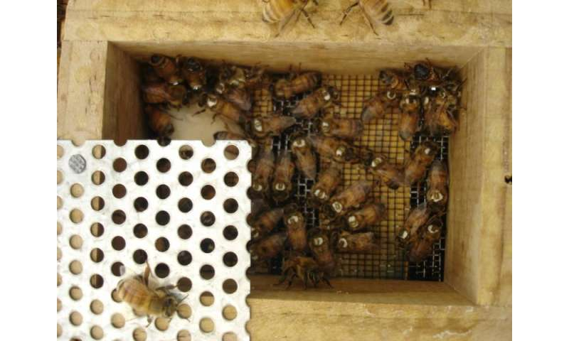 Tiny transmitters glued to the backs of bees for the first time