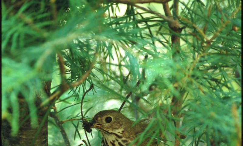 UM, USGS researcher discovers songbird habitat affects reproduction, survival