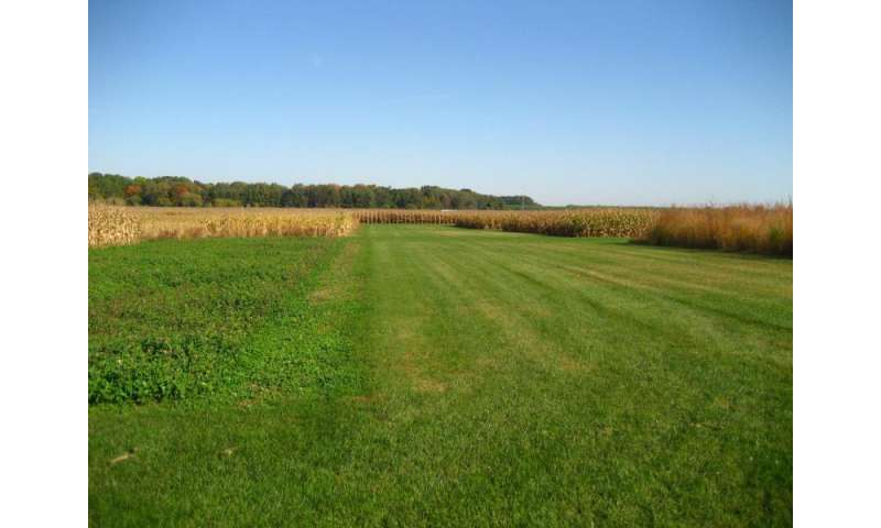UNH research: Crop rotation boosts soil microbes, benefits plant growth