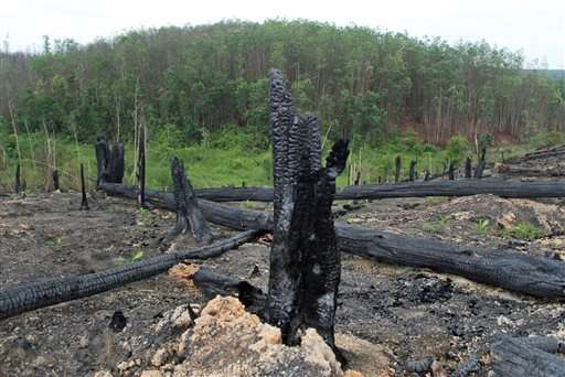 Vast forest fires in Indonesia spawn ecological disaster