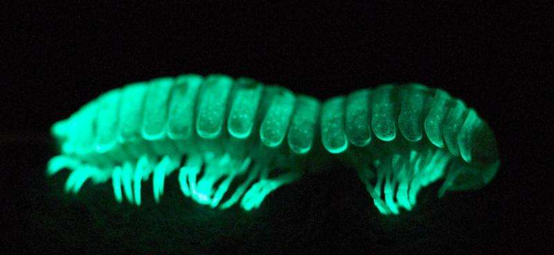 Virginia Tech researcher shines light on origin of bioluminescence