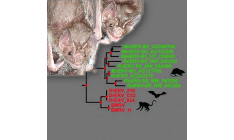 Virus in bats homologous to retroviruses in rodents and primates