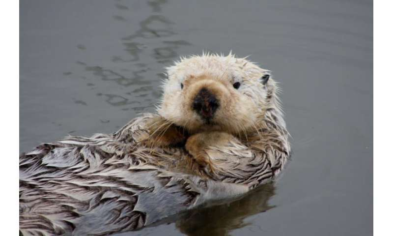 West Coast marine mammals respond to shifting conditions, new research shows