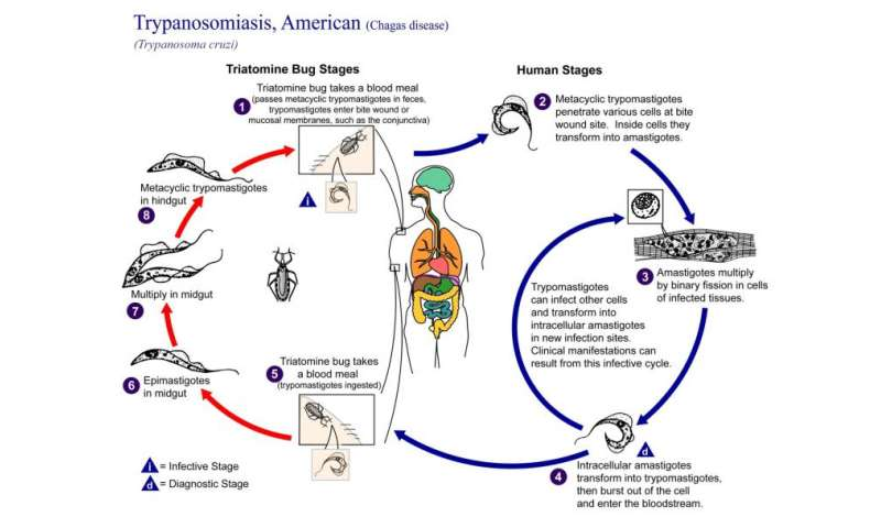 What is Chagas disease?