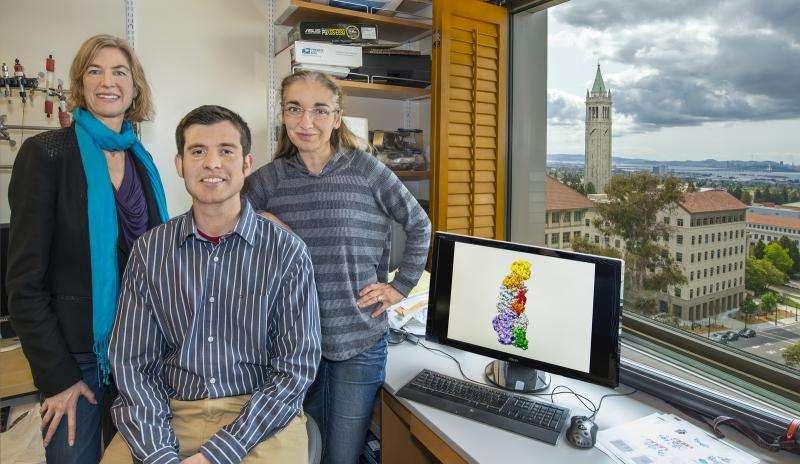 Researchers report on CRISPR-cas surveillance complex that targets RNA