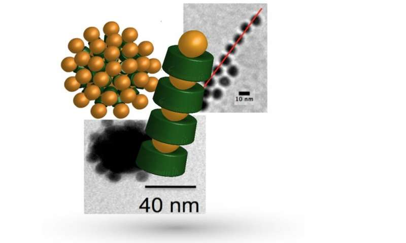 Scientists develop method for producing bio-based materials with new properties
