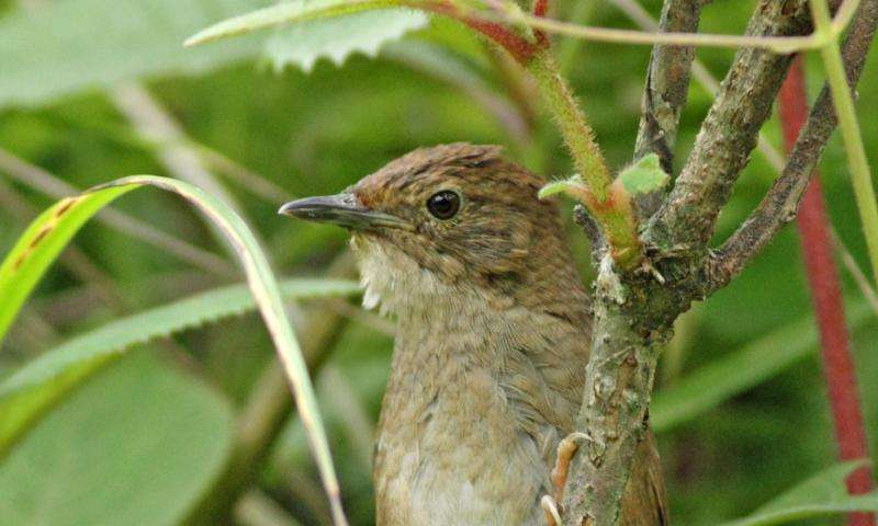 International team discovers elusive new bird in China