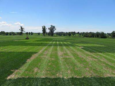 Researchers hope to create more environmentally friendly lawns