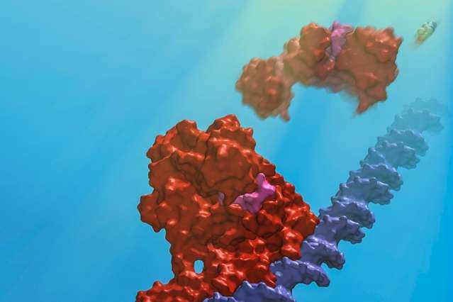 Scientists identify and map the protein behind a light-sensing mechanism