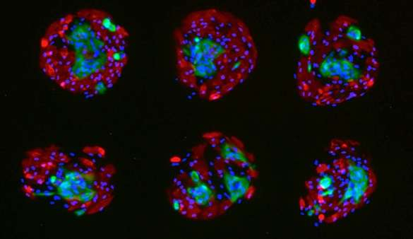 Scientists seeking better way to screen chemicals for cancer-causing effects