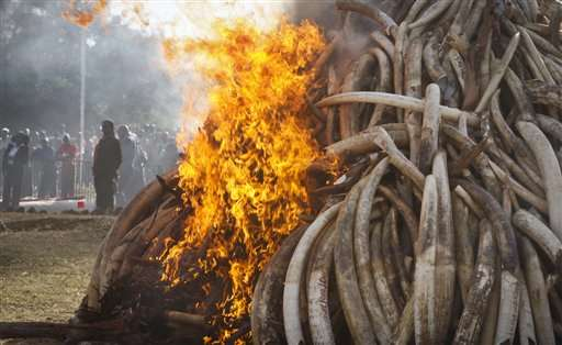Conservationists: New China policy could save elephants