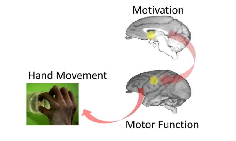 Neuroscientific evidence that motivation promotes recovery after spinal cord injury