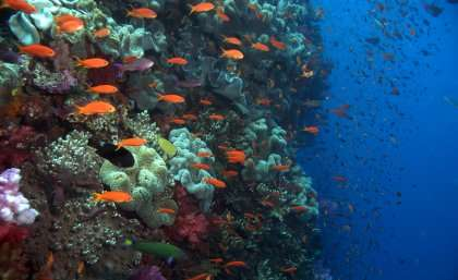 Scientists see risks in biodiversity offsets misuse