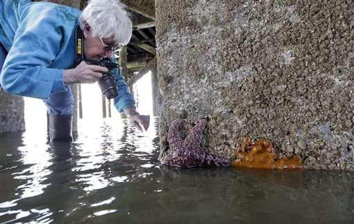 Starfish babies offer glimmer of hope amid mass die-off