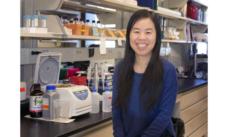Unlocking the biofuel energy stored in plant cell walls