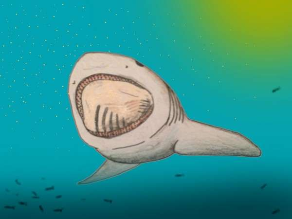 Researchers Discover New Lineage of Prehistoric, Plankton-Eating Sharks