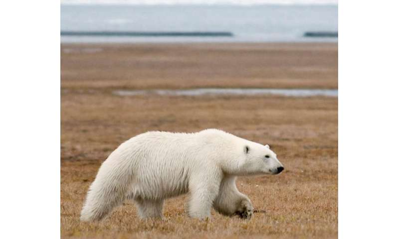 Scientists propose polar protection plan