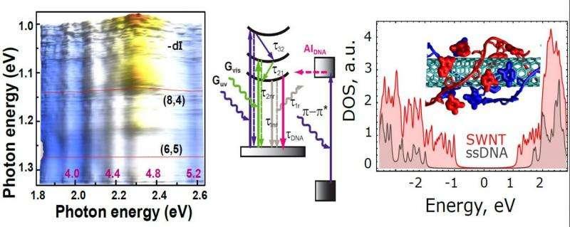 Researchers develop nanoscale probes for ssDNA sustainability under UV radiation