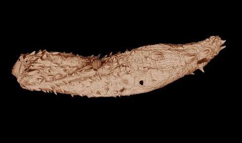Researchers discover fossil samples of ancient, microscopic worms dating back 530 million years