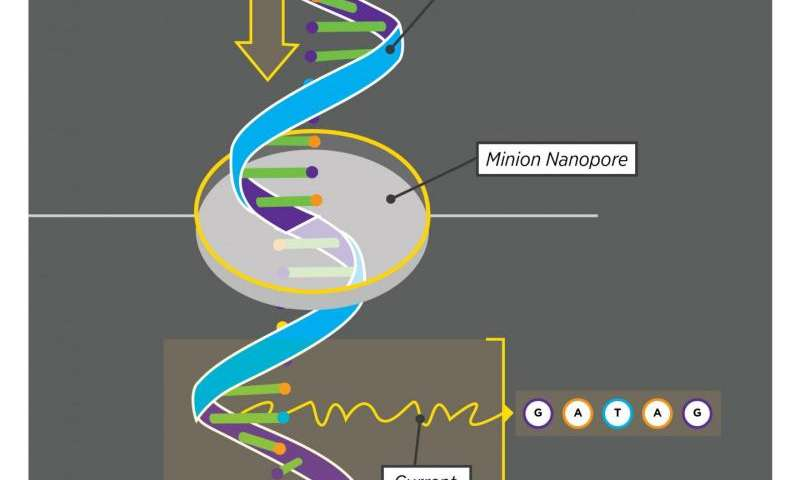 A Uconn Study Of How Human Brain Reads >> A Better Way To Read The Genome